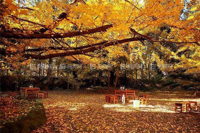 http://yuefangwangimg.oss-cn-hangzhou.aliyuncs.com/SubPublic/Upload/UploadFile/image/2018/05/09/Max_201805091524305393.jpg