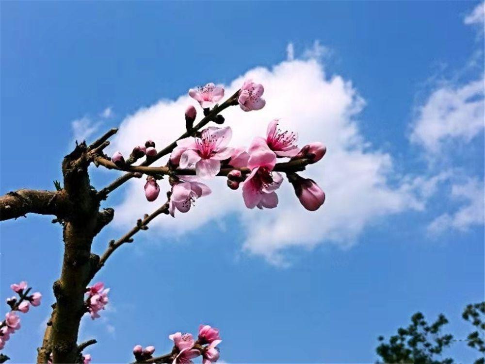http://yuefangwangimg.oss-cn-hangzhou.aliyuncs.com/uploads/20191214/77127aa67c75e0a35e23975036b632edMax.jpg
